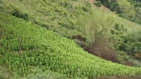 Comunidades Afrodescendientes de Valle y Cauca ganan litigio sobre 188.000 hectáreas